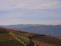 Porto wine region vineyards landscape. Douro river with vineyards meadows and grafic land lines of grappes plantation at São João da Pesqueira region.Here stock photo