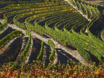 Douro river vineyards port wine Portugal. Douro river with vineyards meadows and grafic land lines of grappes plantation stock photography