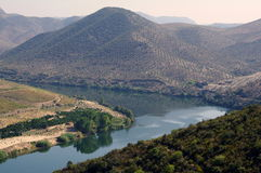 Douro riverscape. In banks of the Douro river there are some olive tree plantations among the vineyards of the demarcated wine region. this is a very scenic one Stock Photo