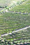 Douro Tal lizenzfreie stockfotografie