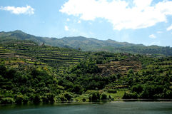 Douro Terraces of Vineyards - Mountains Landscape Stock Images