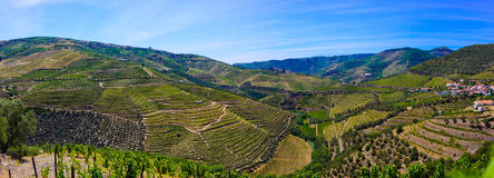 Douro Terraces of Vineyards, Porto Wine, Farm Buildings. Vineyards perfect steps of grapevines for world famous Porto wine production and also for excellent stock photography