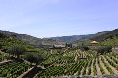 Douro Terraces of Vineyards, Oporto Wine, Farm Buildings Royalty Free Stock Images