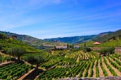 Douro terrasser av vingårdar, Porto vinlandskap, lantgårdbyggnader Royaltyfri Foto
