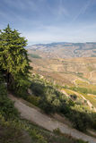 Douro Valey Stock Photos