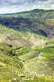 Douro Valley Royalty Free Stock Photos