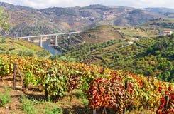 Douro valley at autumn Royalty Free Stock Photos