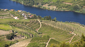 Douro Valley. Landscape in Douro Valley, Portugal stock photos
