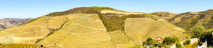 Douro Valley. Panoramic view on vineyards in Douro Valley, Portugal royalty free stock photos