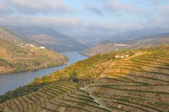 Douro valley port wine vineyards Portugal. Vinotherapy port wine vineyards and terraces Portugal douro valley winelands stock image