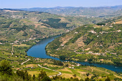 Douro valley in Portugal. Scenic view of the vineyards on the banks of Douro river near Mesão Frio, Portugal Stock Photography
