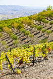 Douro Valley, Portugal Royalty Free Stock Photography