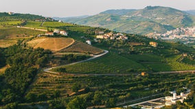 Douro Valley, Top view of the vineyards are on a hills. Stock Photography
