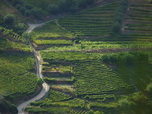 Douro Valley vineyards aerial view. Royalty Free Stock Photography