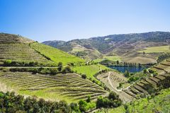 Douro Valley. Vineyards and landscape near Pinhao town, Portugal. Beautiful panoramic view of vineyards and landscape near Pinhao town, Portugal. Douro Valley stock photos