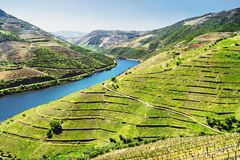 Douro Valley. Vineyards and landscape near Pinhao town, Portugal. Beautiful panoramic view of vineyards and landscape near Pinhao town, Portugal. Douro Valley stock images