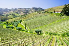 Douro Valley. Vineyards and landscape near Pinhao town, Portugal. Beautiful panoramic view of vineyards and landscape near Pinhao town, Portugal. Douro Valley stock photography