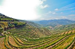 Douro Valley: Vineyards near Duero river around Pinhao, Portugal Stock Photo