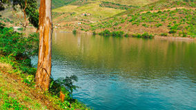 Douro Valley Royalty Free Stock Photography
