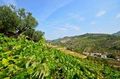 Douro Valley: Vineyards and small village near Peso da Regua, Portugal Stock Photography