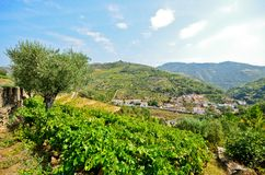 Douro Valley: Vineyards and small village near Peso da Regua, Portugal Stock Photo