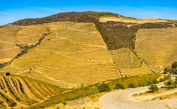 Douro Valley vineyards. View on vineyards in Douro Valley, Portugal stock photo