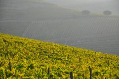 Douro valley winelands Portugal Royalty Free Stock Photography
