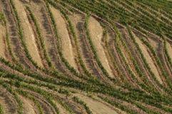 Douro vines. The Douro wine region where Port wine is produced Stock Image