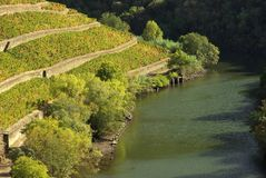 Douro vines Stock Photo