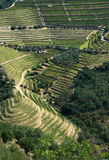 Douro vineyard. Portugal Douro Region - terraced vineyards built on steep slopes on the margins of the Douro River - UNESCO World Heritage site royalty free stock photos