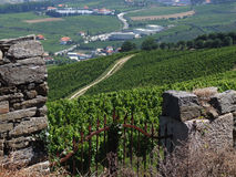 Douro vineyard. General view of a Douro vineyard Royalty Free Stock Photos
