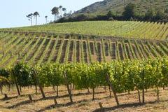Douro Vineyard Royalty Free Stock Image