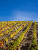 Douro Vineyards Royalty Free Stock Images