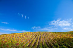 Douro Vineyards. Landscape Photo : Beautiful view over the Port Wine vineyards in Douro, Portugal on Fall / Autumn royalty free stock photo