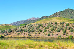 Douro Vineyards Hill Stock Photos