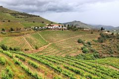 Douro vineyards, Portugal. Portugal wine region - vineyards on hills along Douro river valley. Alto Douro DOC stock images