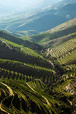 Douro Vineyards by the River. Landscape Photo : Beautiful view over the Port Wine vineyards in the Douro Region, by the river, in Portugal on Fall / Autumn royalty free stock photography