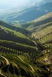Douro vingårdar vid floden Royaltyfri Fotografi