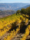 North Portugal landscape with mountains and vineyards royalty free stock images