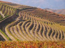 North Portugal landscape with mountains and vineyards stock image