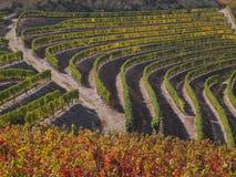 Douro wine region vineyards landscape Portugal. Douro river with vineyards meadows and grafic land lines of grappes plantation at São João da Pesqueira royalty free stock photos