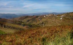 Douro wine region vineyards landscape Portugal. Douro river with vineyards meadows and grafic land lines of grappes plantation at São João da Pesqueira royalty free stock photo