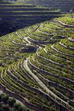 Douro1 Stockfotos