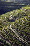 Douro1 Stock Photos