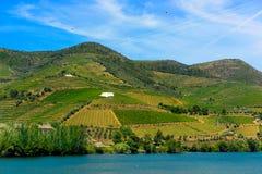 Douroterrassen van Wijngaarden, Dona Matilde Oporto Wine royalty-vrije stock foto