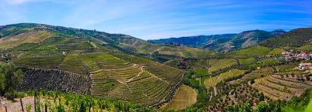 Douroterrassen van Wijngaarden, Porto Wijn, Landbouwbedrijfgebouwen stock fotografie