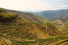 Dourovallei: Wijngaarden dichtbij de rivier van Duero en Pinhao, Portugal stock foto