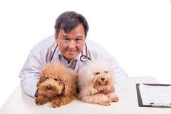 Doutor amigável do veterinário que abraça dois cães bonitos no fundo branco Imagens de Stock