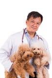 Doutor amigável do veterinário que abraça dois cães bonitos no fundo branco Fotos de Stock