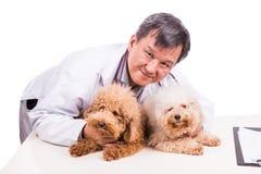 Doutor amigável do veterinário que abraça dois cães bonitos no fundo branco Imagens de Stock Royalty Free